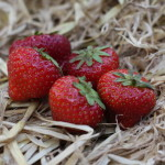 Photo 33_Strawberries