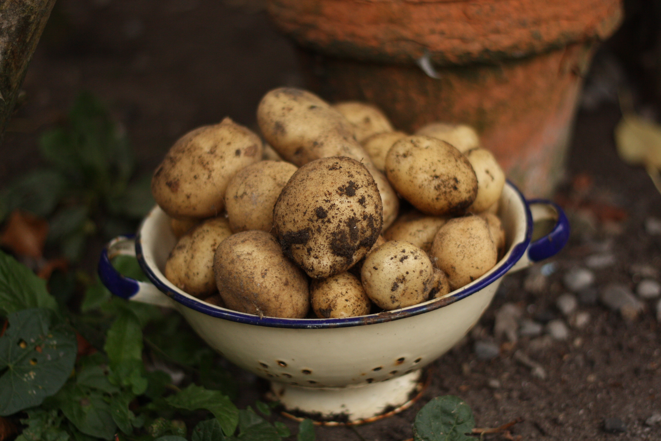 Photo 57_spuds